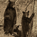Paintography - Family Of Bears In The Woods by Dan Friend