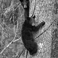 Paintography -two Bear Cubs In A Tree by Dan Friend