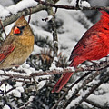 Pair Of Cardinals In Winter by Peg Runyan