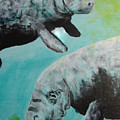 Pair Of Florida Manatees by Susan Kubes