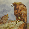Pair Of Golden Eagles By Thorburn by Archibald Thorburn