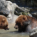 Pair Of Grizzly Bears Wading In A Shallow River by DejaVu Designs