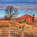Pair Of Horses Grazing In A Field by Larry Braun