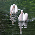 Pair Of Pelicans by Teresa Blanton