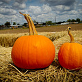 Pair Of Perfect Pumpkins by Marisela Mungia