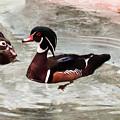 Pair Of Wood Ducks by Cynthia Woods