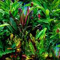 Pais Tropical by Paul Sutcliffe