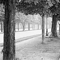 Palais Park by Dave Beckerman