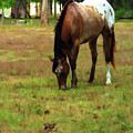 Palamino Horse Grazing by Rosalie Scanlon