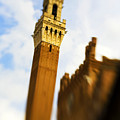 Palazzo Pubblico Tower Siena Italy by Marilyn Hunt