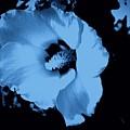 Pale Blue Tinge Hibiscus Flower by Debra Lynch