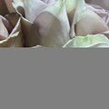 Pale Roses by Stacy Devanney