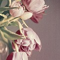 Pale Tulips by Cathie Tyler