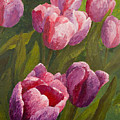 Palette Tulips by Phyllis Howard