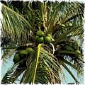 Palm 1 by Michael Peychich