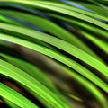 Palm Abstract By Kaye Menner by Kaye Menner