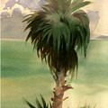 Palm At Horseshoe Cove by Neal Smith-Willow