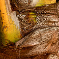 Palm Bark by Aquadro Photography
