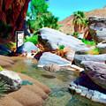 Palm Canyon Park by Snake Jagger