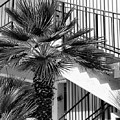 Palm Chevron Palm Springs by William Dey