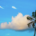 Palm Cloud Delray Beach Florida by Lawrence S Richardson Jr