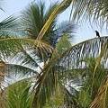 Palm Collection - Chilling by Victor K