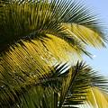 Palm Detail by Corinne Rhode