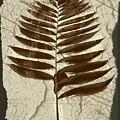 Palm Fossil Sandstone  by Delynn Addams