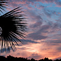 Palm Frond At Dusk by Peg Urban