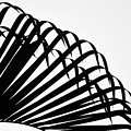 Palm Frond Black And White by Christopher Johnson