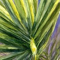 Palm Frond by Marilyn Barton