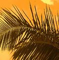 Palm Frond Sunset by Ian  MacDonald