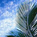 Palm Fronds And Clouds by Dana Edmunds - Printscapes
