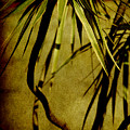 Palm Fronds Are Green by Susanne Van Hulst