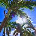 Palm Gazing by Kevin Karolewicz