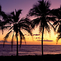 Palm Horizons by Bill Schildge - Printscapes