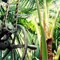Palm House Pulley by Kyle Hanson