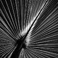 Palm In Monochrome by Robert Mitchell
