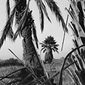Palm In View Bw Horizontal by Heather Kirk
