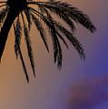 Palm by Joseph Yvon Cote
