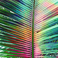 Palm Leaf Art by Stacey Chiew