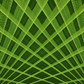Palm Leaf Composite by Dutch Bieber