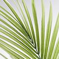 Palm Leaf by Elena Elisseeva