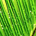 Palm Leaf by Scott Pellegrin
