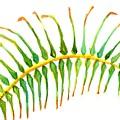 Palm Leaf Watercolor by Carlin Blahnik CarlinArtWatercolor