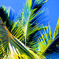 Palm Leaves Against The Sky 3 Ae  by Lyle Crump
