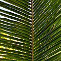 Palm Leaves by Tom Bell