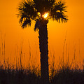 Palm Light by Marvin Spates