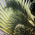 Palm On Palm by Alex England