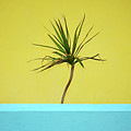 Palm On Porch by MotionOne Studios